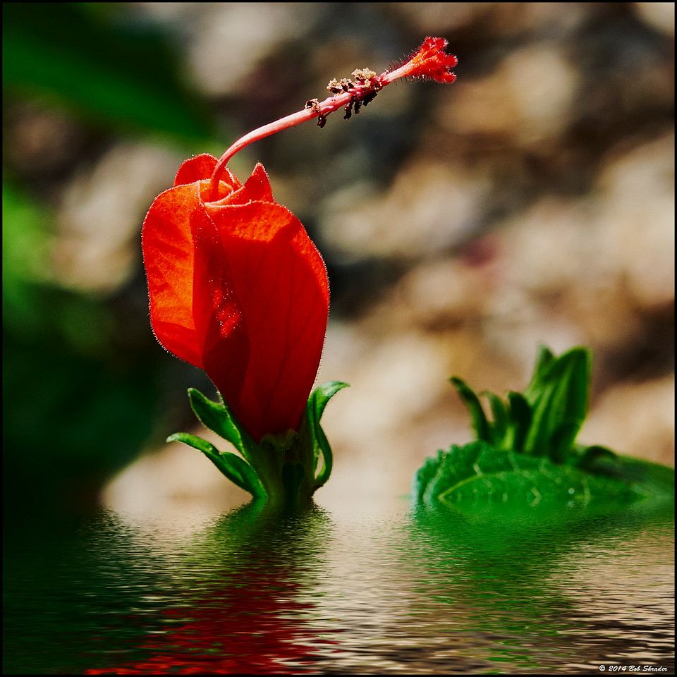 Flower in Reflection